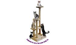 COMPASSION-4-CATS-LOGO